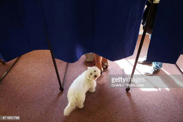 A dog waits outside a polling booth as its owner prepares to vote at a polling station in Deauville northwestern France on April 23 during the first...