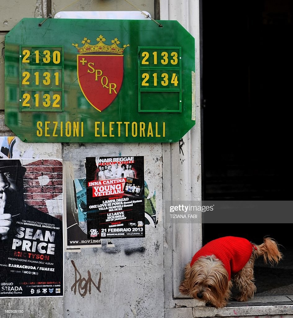 A dog waits outside a polling station in dontown Rome on February 24,2013, as part of Italy's general elections. Italians fed up with austerity voted on Sunday in the country's most important election in a generation, as Europe held its breath for signs of fresh instability in the eurozone's third economy.