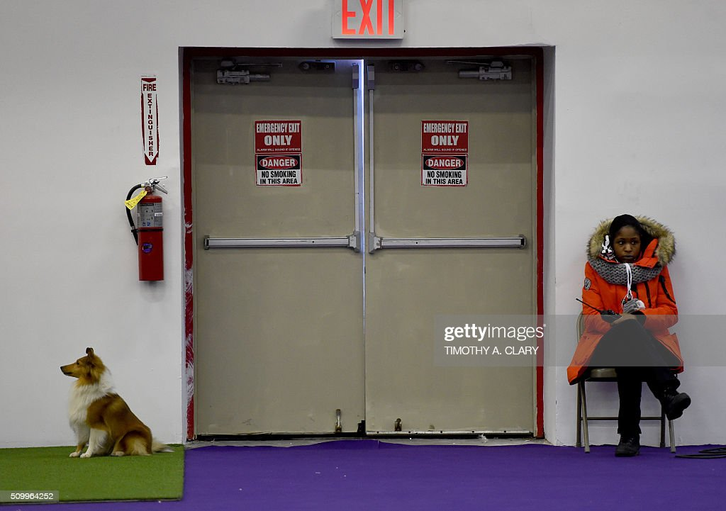 TOPSHOT A dog waits to run the agility course during the 3rd Annual Masters Agility Championship on February 13 2016 in New York at the 140th Annual...