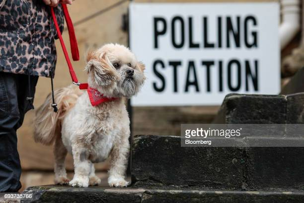 A dog waits with its owner outside a generalelection polling station at the Town Hall in Chipping Norton UK on Thursday June 8 2017 Britons vote...