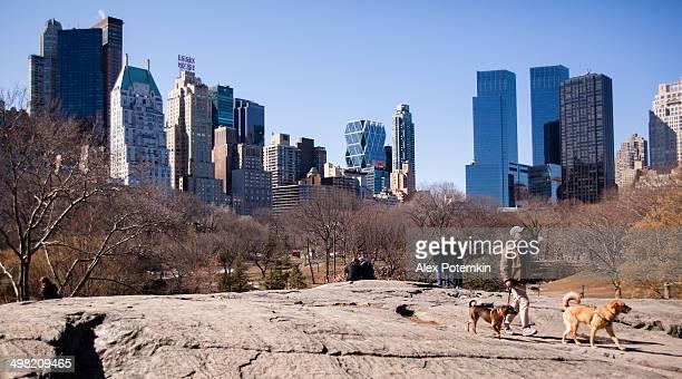 Dog walker in the Central Park