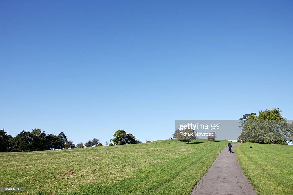 Dog Walker on Primrose Hill