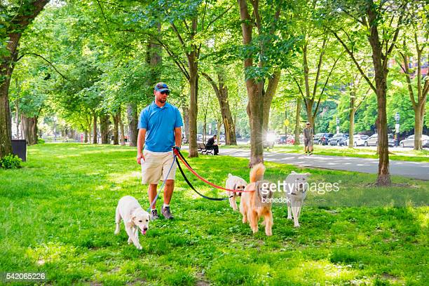 Dog Walker Walks Dogs at Back Bay Area Boston Massachusetts