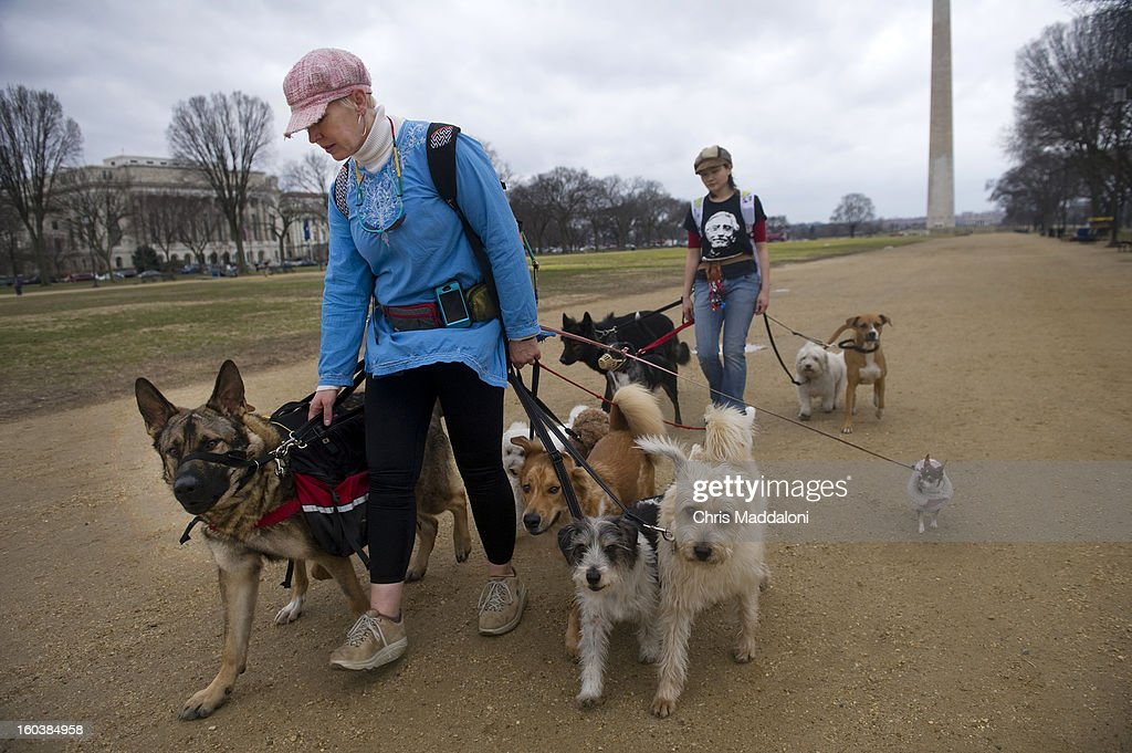 Dog walkers Kate Holmes and Erin Han walk 13 dogs along the Mall near the Washington Monument. The forecasted high temperature for today is 70 degrees.