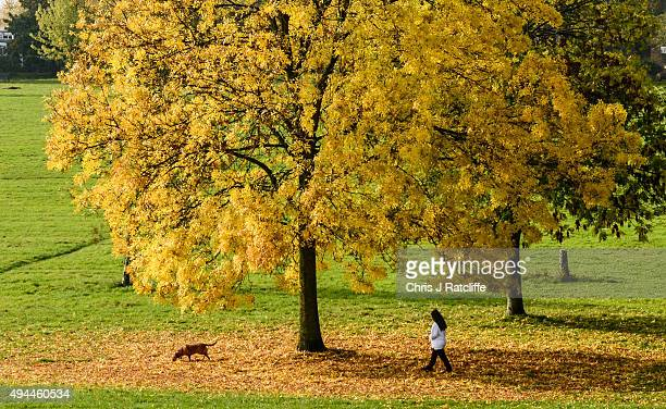 Dog walkers pass through fallen autumn leaves on a warm sunny day in Brockwell Park on October 27 2015 in London England A burst of heat saw...