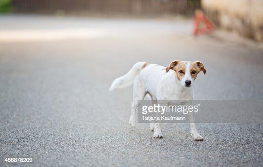 Dog walking around on a Street