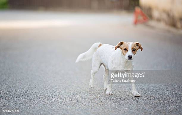 Dog walking around on a Street