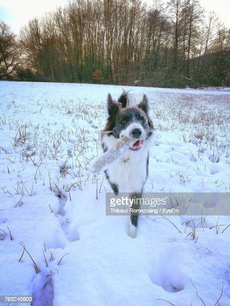 Dog Walking On Snow Field During Winter