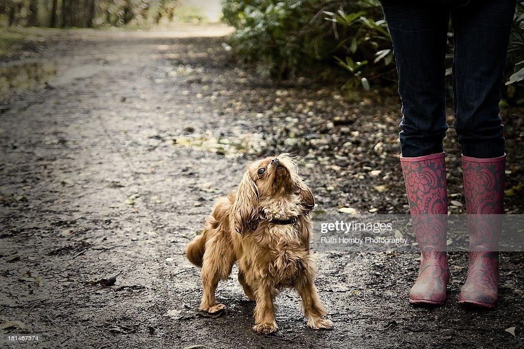 Dog Walking : Stock Photo