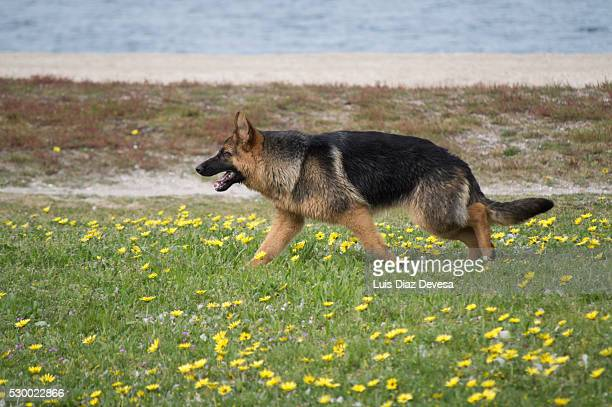 Dog walking through fields