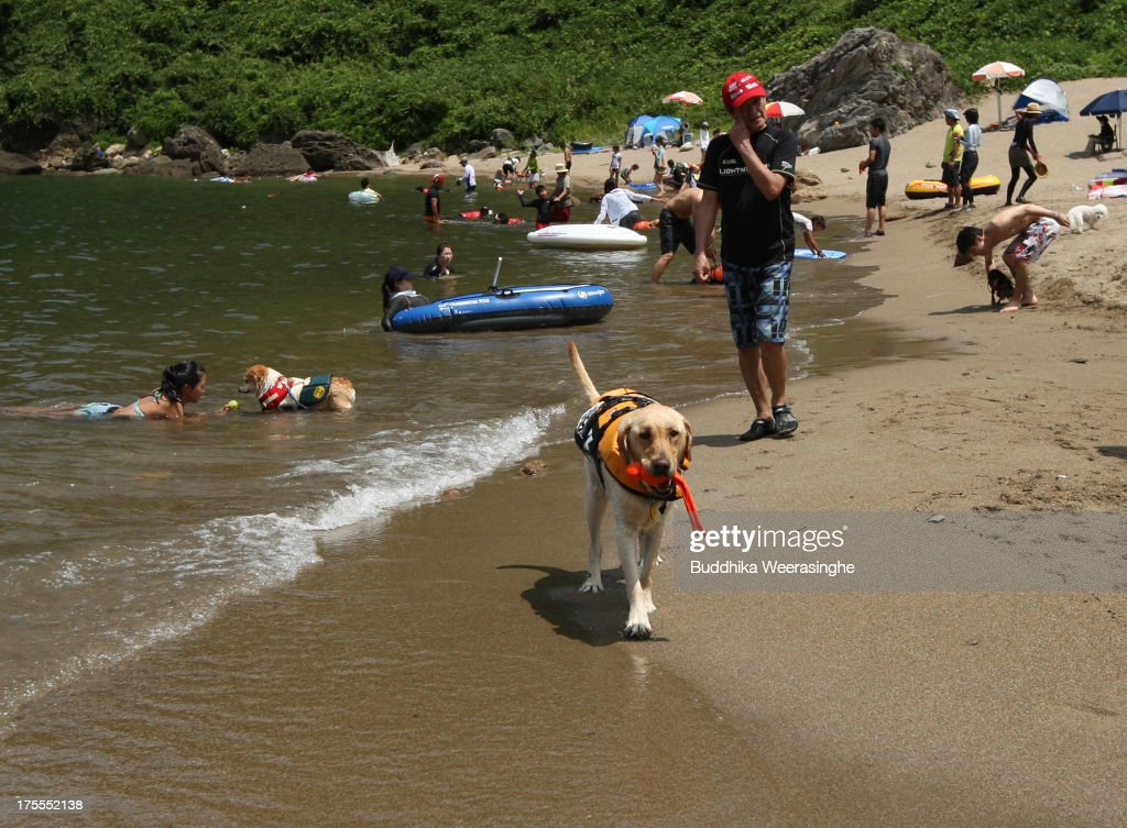 A dog walks as at Takeno Beach on August 4, 2013 in Toyooka, Japan. This beach is open for dogs and their owners every summer between the months of June and September. .