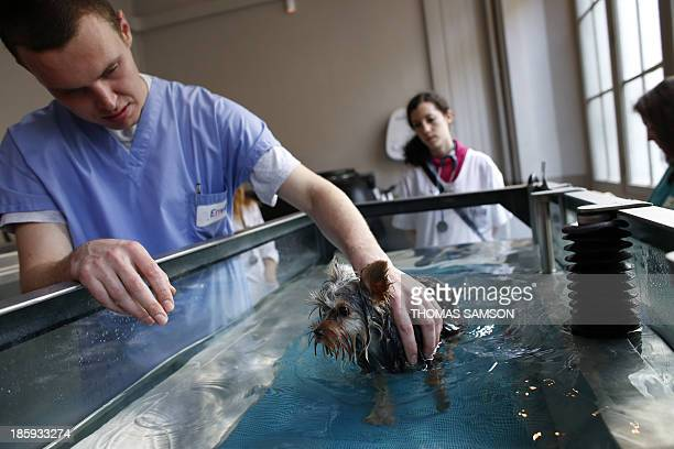 A dog walks in a small pool on October 23 2013 with the help of an employee from the Alforme animal reeducation center of the National Veterinary...