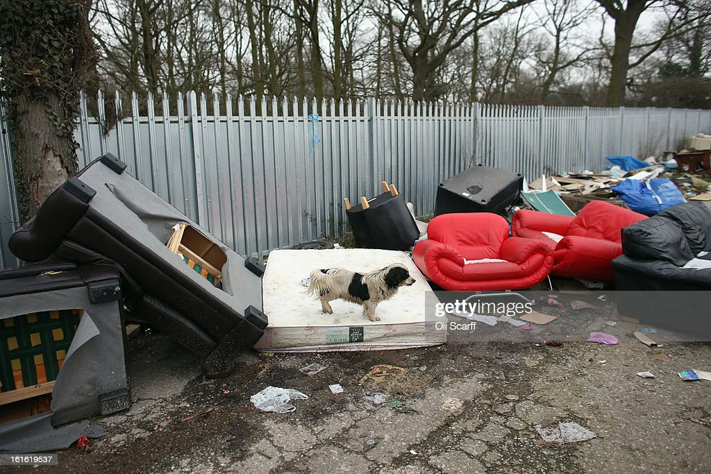 A dog walks on discarded furniture on the portion of the Dale Farm traveller's camp which was cleared of residents and structures by Basildon Council , on February 13, 2013 in Crays Hill, England. Basildon Council have approved a new site to accommodate the displaced travellers, which lies less than 800 meters from Dale Farm. Following Basildon Council's eviction in October 2011, which was estimated to have cost 7 million GBP, many travellers now reside on the access road for the legal portion of the Dale Farm site.