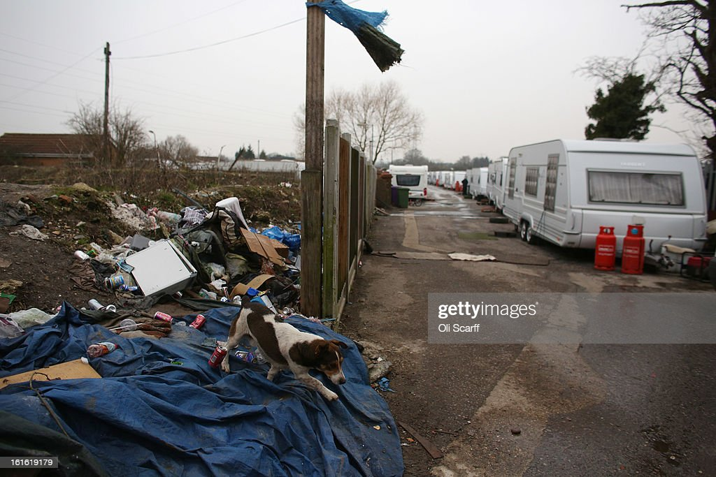 A dog walks on rubbish discarded on the portion of the Dale Farm traveller's camp which was cleared of residents and structures by Basildon Council on February 13, 2013 in Crays Hill, England. Basildon Council have approved a new site to accommodate the displaced travellers, which lies less than 800 meters from Dale Farm. Following Basildon Council's eviction in October 2011, which was estimated to have cost 7 million GBP, many travellers now reside on the access road for the legal portion of the Dale Farm site.