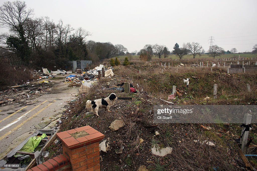 A dog walks on the portion of the Dale Farm traveller's camp which was cleared of residents and structures by Basildon Council , on February 13, 2013 in Crays Hill, England. Basildon Council have approved a new site to accommodate the displaced travellers, which lies less than 800 meters from Dale Farm. Following Basildon Council's eviction, which was estimated to have cost 7 million GBP, many travellers now reside on the access road for the legal portion of the Dale Farm site.