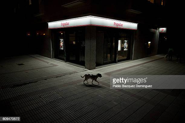 A dog walks past a Banco Popular branch on September 20 2016 in Alcorcon near Madrid Spain Spain's Banco Popular plans to cut around 3000 jobs and...