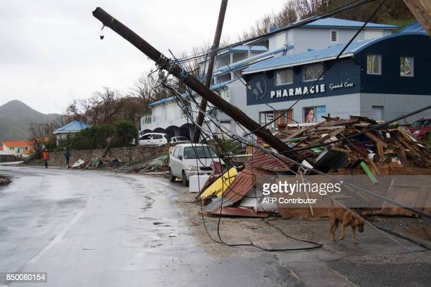 A dog walks past damages on September 20 in Grand Case on the French side of the Caribbean island of SaintMartin after hurricane Maria and Hurricane...