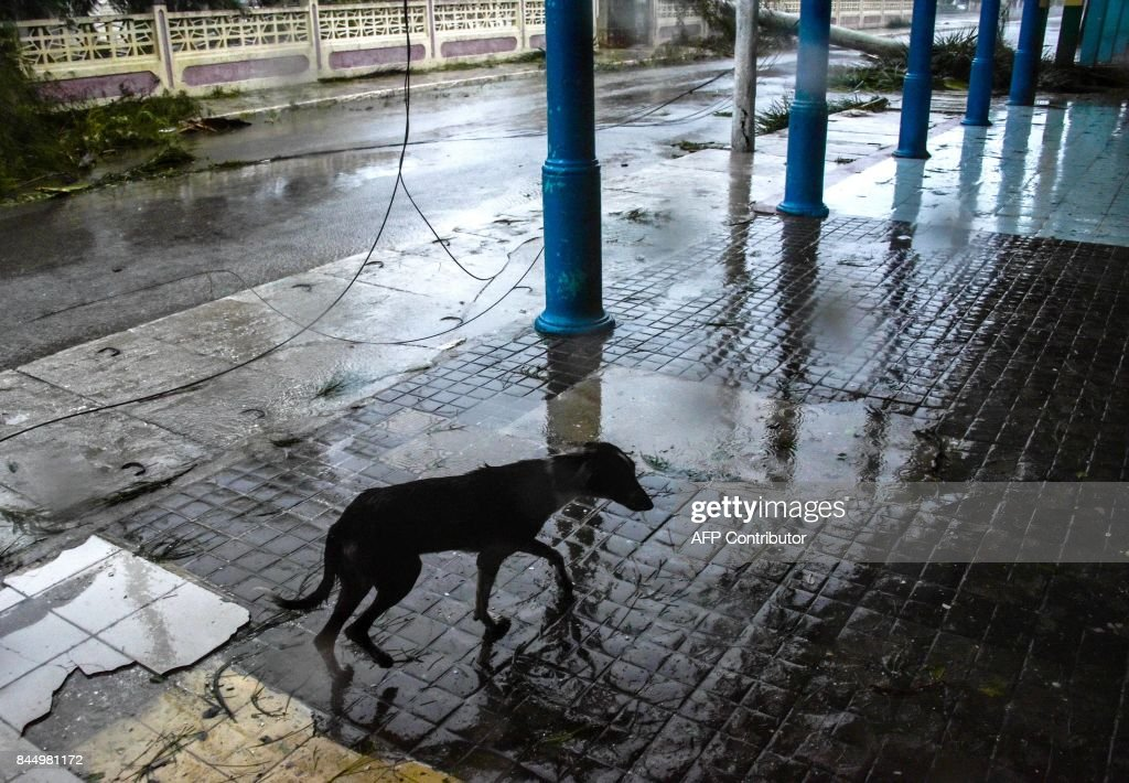 A dog wanders along a street covered by debris after the passage of Hurricane Irma, at Caibarien, Villa Clara province, 330km east of Havana, on September 9, 2017. Irma's blast through the Cuban coastline weakened the storm to a Category Three, but it is still packing 125 mile-an-hour winds (205 kilometer per hour) and was expected to regain power before hitting the Florida Keys early Sunday, US forecasters said. The Cuban government extended its maximum state of alert to three additional provinces, including Havana, amid fears of flooding in low-lying areas. /