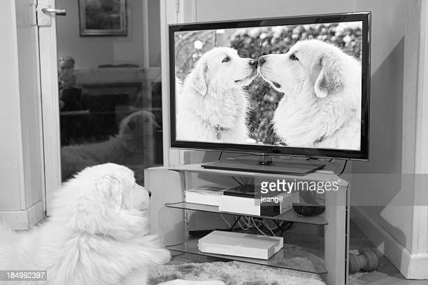 Dog watches romantic canine couple on TV