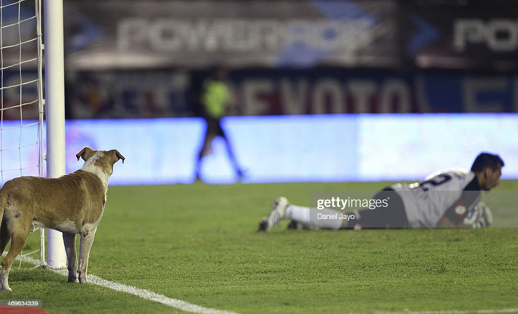 A dog watches Sebastian Torrico, goalkepeer of San Lorenzo during a match between San Lorenzo and Racing Club as part of Torneo Final 2014 at Nuevo Gasometro Stadium on February 15, 2014 in Buenos Aires, Argentina.