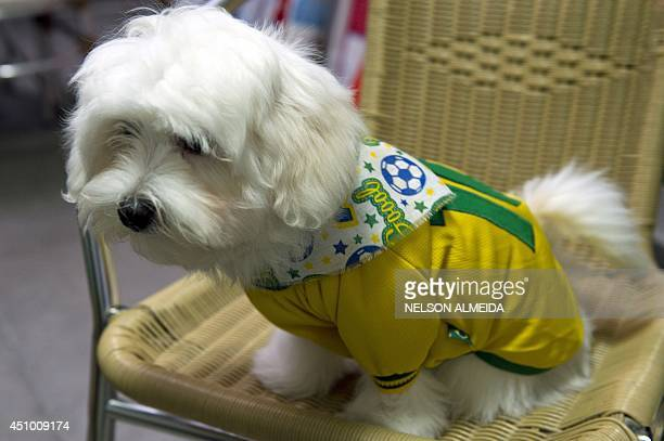A dog wearing a Brazilian jersey is seen at a pet shop in Sao Paulo Brazil on June 20 2014 during the FIFA World Cup AFP PHOTO / NELSON ALMEIDA