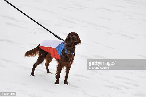 A dog wearing a Czech Republic flag waits for athlete Ondrej Moravec of Czech Republic during the men 10 km sprint at the IBU World cup in biathlon...