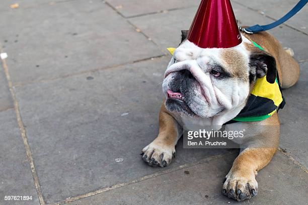 A dog wearing a Jamaican flag lays on the floor during the Notting Hill Carnival on August 29 2016 in London England The Notting Hill Carnival has...