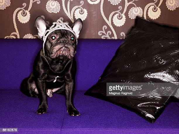 A dog wearing a tiara.