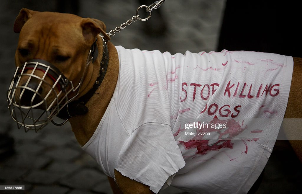 A dog wearing a T-shirt displaying 'Stop Killing Dogs' attends an animal rights activists' protest in the All Saints' Day on November 1, 2013 in Prague, Czech Republic. Activists were protesting against the Romania law for stray dog culling approved by Romania's constitutional court in September this year. According to estimates 65,000 stray dogs live on the streets of Bucharest.