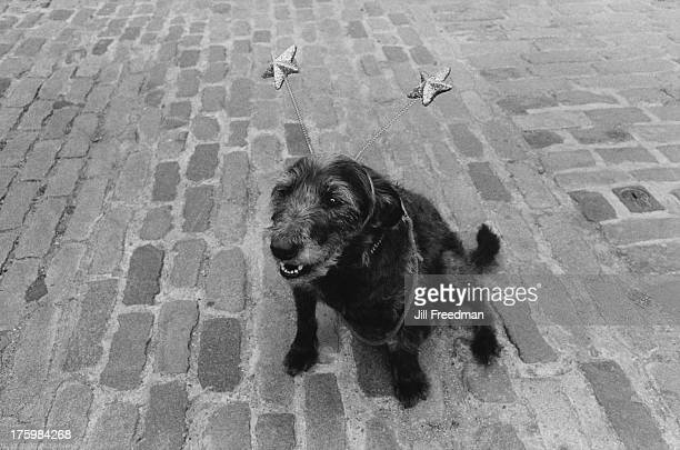 A dog wearing deely bobbers in Covent Garden London 1982