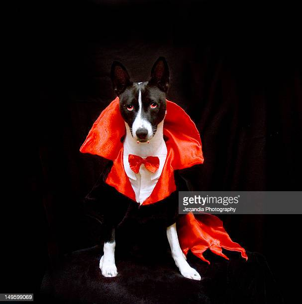 Dog wearing Dracula dress