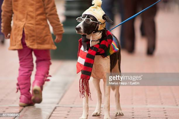 Dog Wearing Eyeglasses And Muffler