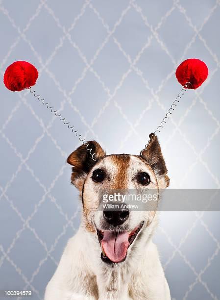 Dog wearing funny headdress