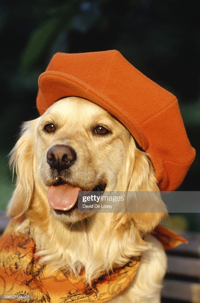 Dog wearing hat and scarf, front view, close-up : Stock Photo