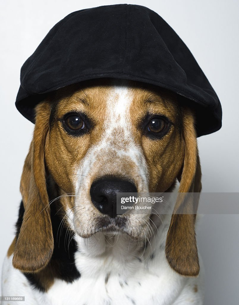 Dog wearing hat : Stock Photo