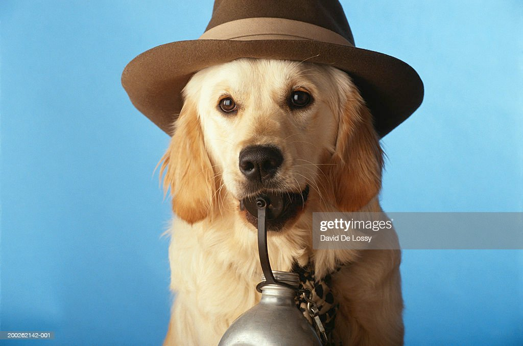 Dog wearing hat with bottle, close-up : Stock Photo