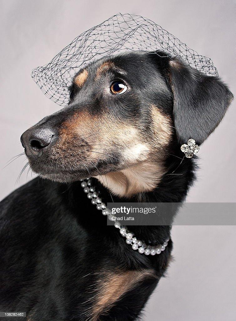 Dog wearing jewelry : Stock Photo