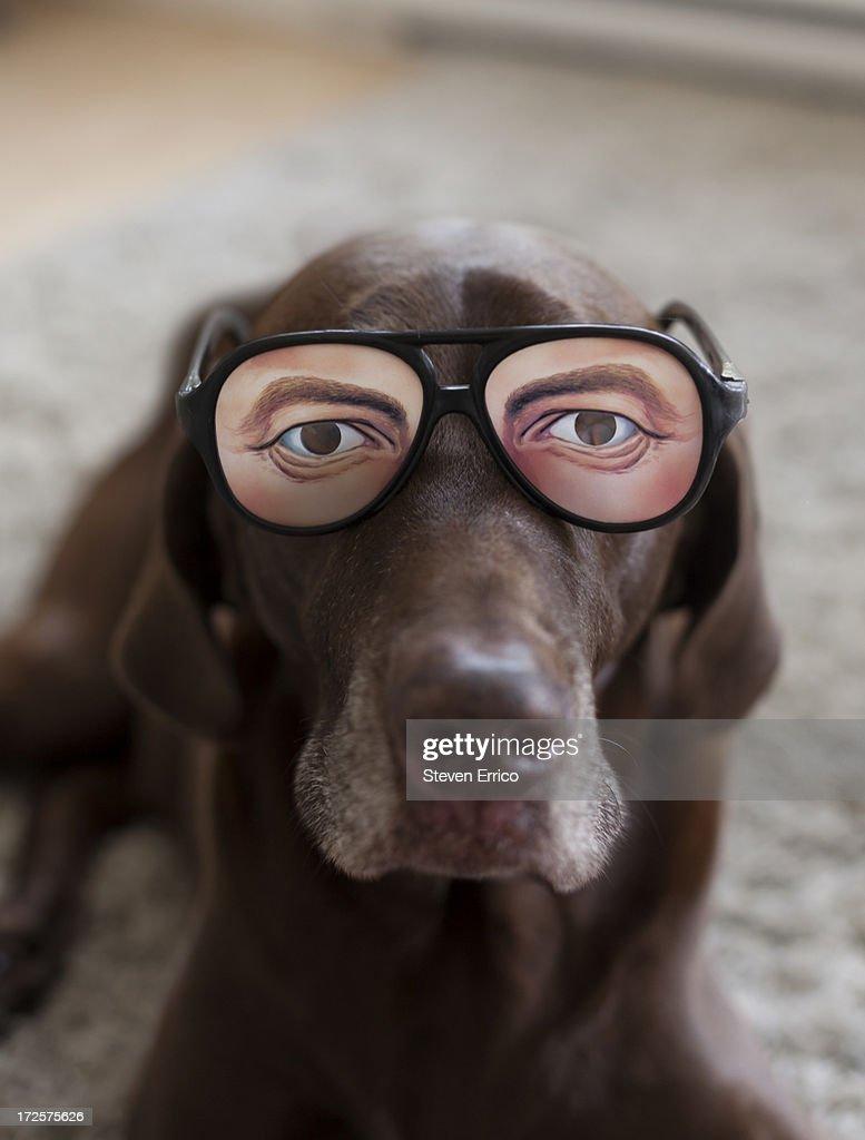 Dog wearing novelty glasses : Stock Photo