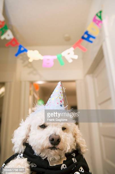 Dog wearing party hat, 'Happy Birthday' banner in background