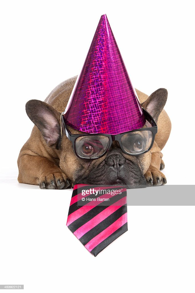 Dog wearing party hat on : Stock Photo