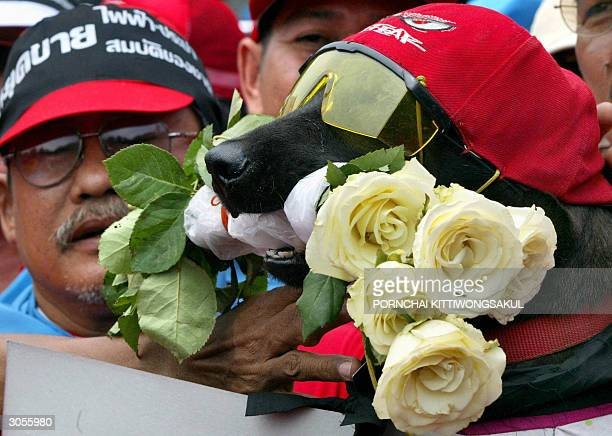 A dog wearing sunglasses and with flowers in its mouth joins workers from the Electricity Generating Authority of Thailand during a rally against the...
