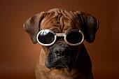 Dog wearing sunglasses