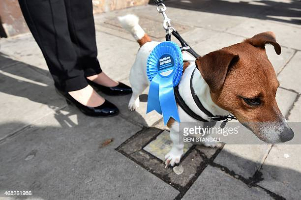 A dog wears a conservative rosette as The Mayor of London Boris Johnson visits the Hendon constituency in north west London on April 1 2015 Hendon...