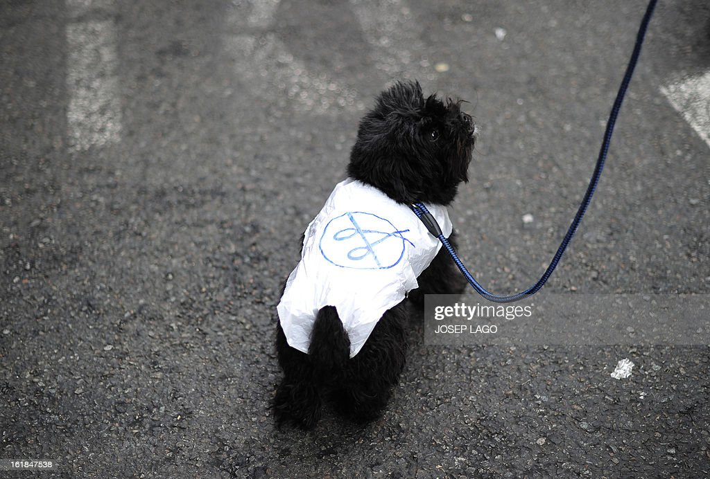 A dog wears a fabric decorated with scissors, symbolizing the country's spending cuts, during a demonstration against plans to cut medical spending and privatise hospital services in Barcelona on February 17, 2013. Thousands of Spanish doctors, nurses and other health care workers, many wearing white lab coats, demonstrated today in 16 cities against budget cuts and plans to partly privatise medical services. Nationally, Prime Minister Mariano Rajoy's government has slashed health spending by seven billion euros (9.1 billion USD) a year as part of a campaign to squeeze 102 billion euros out of the crisis-racked country's budget by 2014.