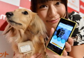 A dog wears a 'Petfit tag' equipped with 3G and Bluetooth from Japan's largest mobile phone carrier NTT Docomo during a press briefing in Tokyo on...