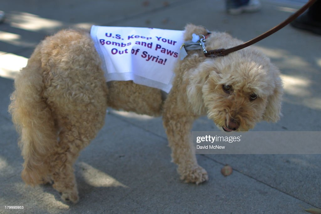 A dog wears a protest sign at a rally to urge Congress to vote against a limited military strike against the Syrian military in response to allegations that President Bashar Hafez al-Assad has used sarin gas to kill civilians on September 7, 2013 in Los Angeles, California. The Obama administration claims to have clear evidence that the Syrian military broke international law by killing nearly 1,500 Syrian civilians, including at least 426 children, in a chemical weapons attack on August 21, and is seeking the support of Congress for a missile strikes to prevent future chemical weapons attacks by the regime and other nations.