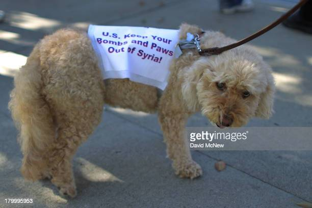 A dog wears a protest sign at a rally to urge Congress to vote against a limited military strike against the Syrian military in response to...