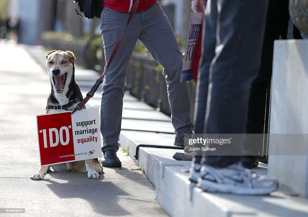 A dog wears a sign in support of same-sex marriage during a rally in support of marriage equality on March 26, 2013 in San Francisco, California. Supporters of same-sex marriage held a vigil after the U.S. Supreme Court heard arguments on California's Proposition 8, the controversial ballot initiative that defines marriage as between a man and a woman.