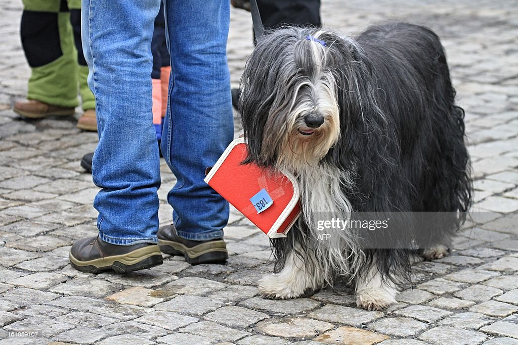 A dog wears a suitcase around its neck as people gather on Masaryk Square in Zabreh, central Moravia, Czech Republic, on February 17, 2013, for an attempt to bring a record number of suitcases to one place. 579 people with suitcases came to the place to honor Czech adventurer, traveller and gold digger Jan Eskymo Welzl. The record will be officially registered in the Guinness Book of Records.