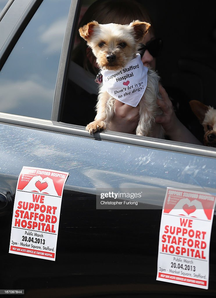 A dog wears a 'Support Stafford Hospital' scarf as campaigners take to the streets of Stafford as they demonstrate to keep major health services at the scandal hit Stafford Hospital on April 20, 2013 in Stafford, England. The march was organised by the Support Stafford Hospital campaign group who are fighting cuts to major health services at the hospital. The Health regulator monitor has appointed two special administrators to produce a plan for the reorganisation of future services.